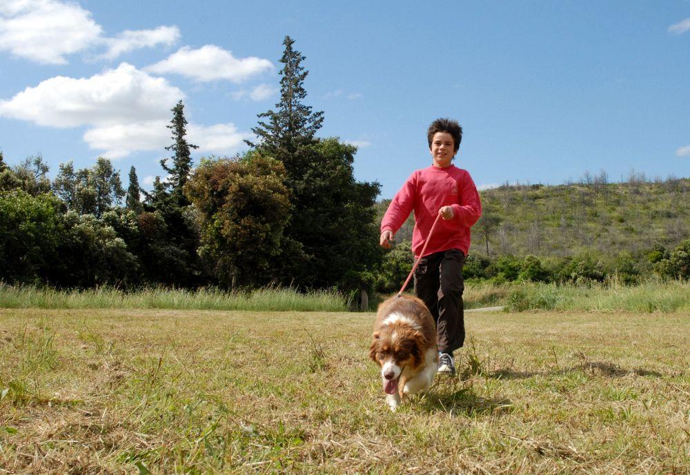 Ist der Australian Shepherd kinderfreundlich?