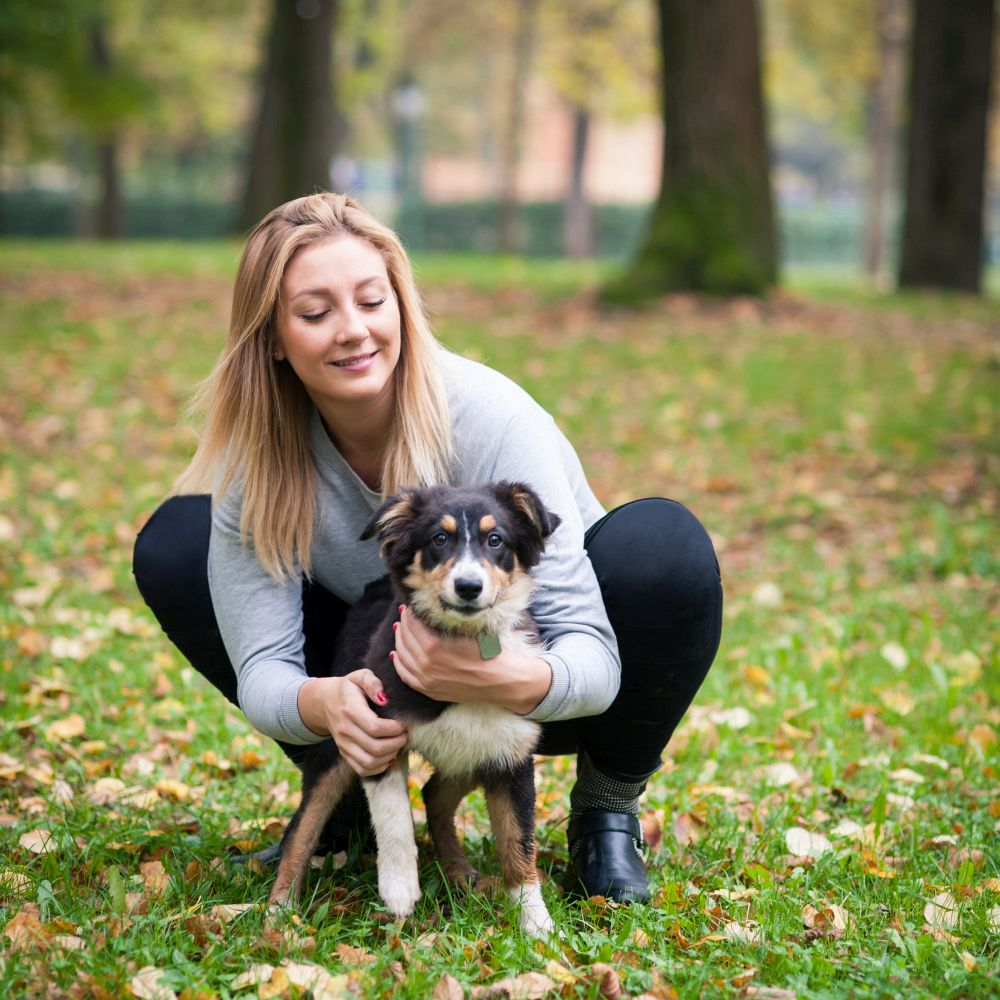 Boxer Australian Shepherd Mix | Dog Breeds Picture