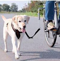 So könnte eine passende Hunde Fahrradleine aussehen.