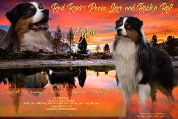 "Red River´s Peace Love and Rock´n Roll,""Cuba"" black-tri, red-factored"
